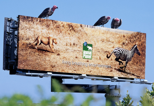 Animal Planet Outdoor